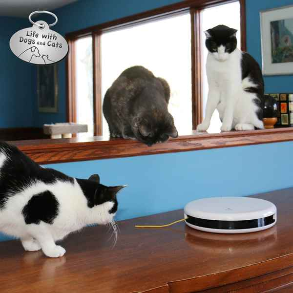 With the toy on the buffet, the cats can play without worrying about canine interference.