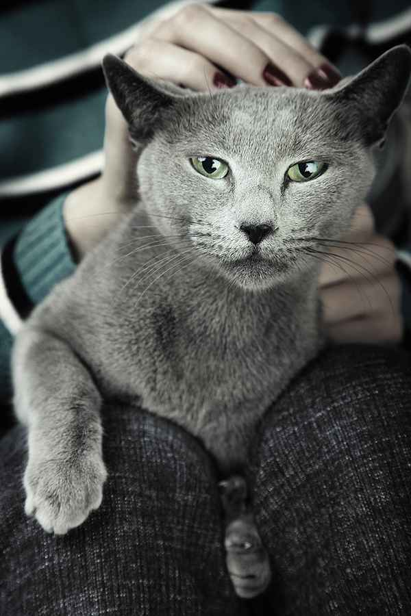 Good things happen indoors. Gray cat by Shutterstock.