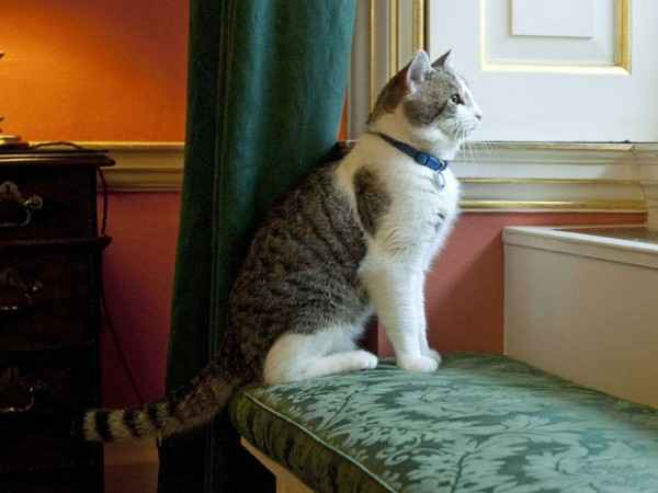 Larry-the-cat-at-10-downing-street